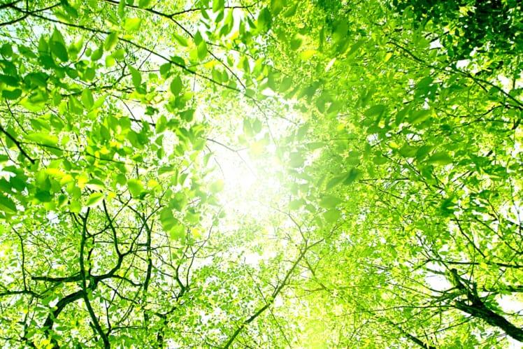 新緑、木漏れ日、見上げれば心が洗われる
