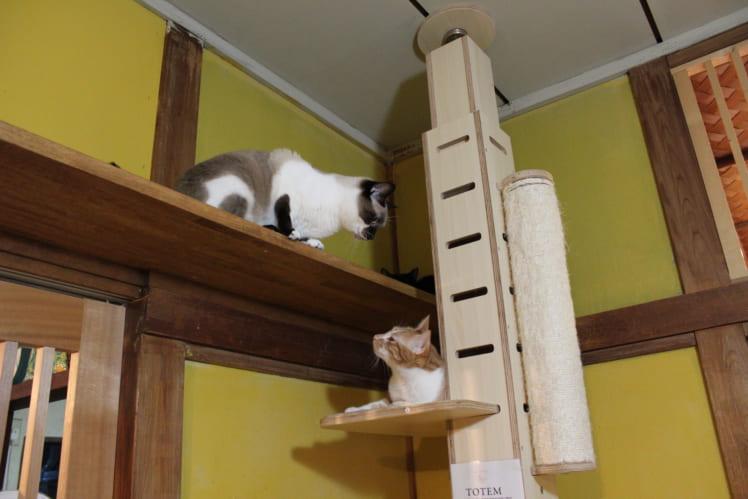 里親さんとの相性、猫同士の相性、どちらも重要です